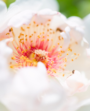 花 イメージ